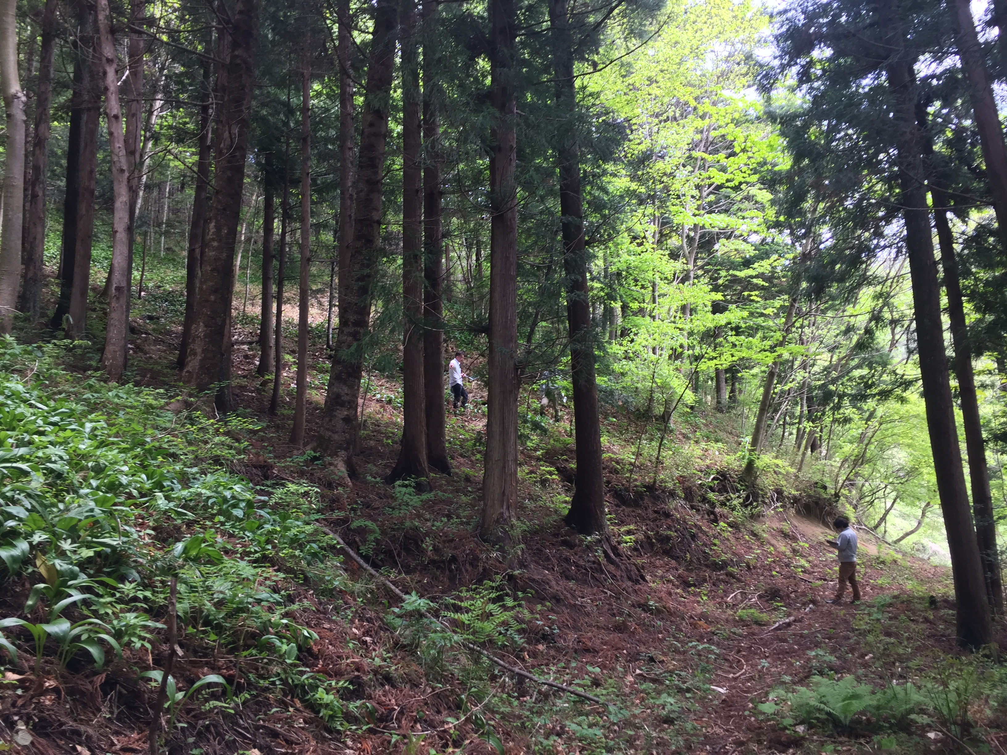 Forests in Fukushima