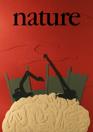 An image constructed of paper and cardboard depicting a wall being built between a brain and surrounding blood. The image is intended to replicate a cover of the journal Nature.