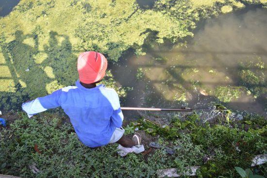 Algal Bloom in Godavari River