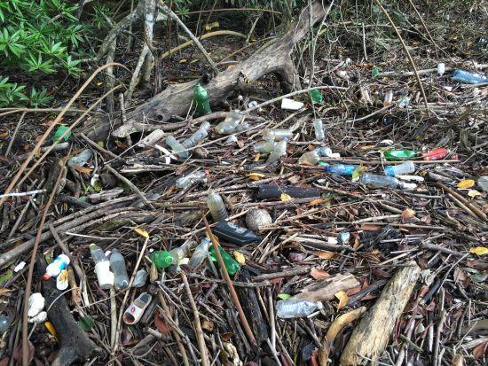 Mangrove Plastics